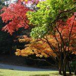 Anna X Wilde - Bunte Blätter an den Bäumen