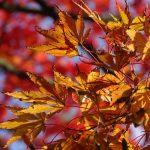 herbstliche Blätter in orange und rot